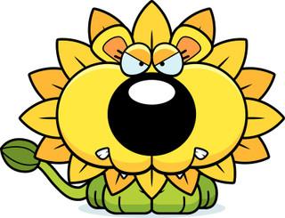 Anger Management Flower Essence