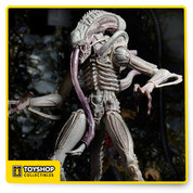 """Celebrate the 30th Anniversary of Aliens with three extraordinary action figure debuts!  The Albino Alien is our first concept figure from the 1986 movie. It was inspired by the original James Cameron screenplay, which describes an albino version of the Xenomorph that has an excreting probe in place of the usual second inner mouth.  The Albino Alien has over 30 points of articulation and features a bendable mouth probe and a frightening new color scheme.  All figures stand approximately 7"""" tall (Albino Alien is over 9"""" tall) and come in 30th Anniversary clamshell packaging."""