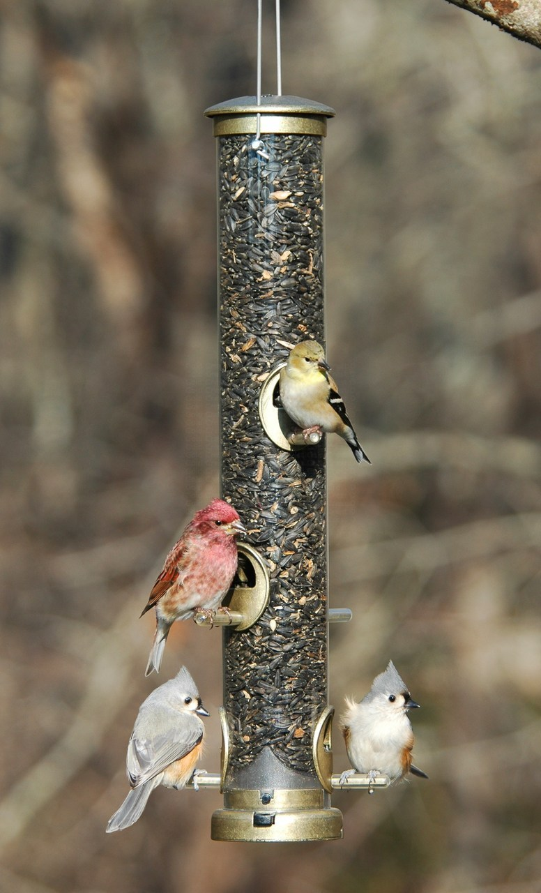 bird-feeder-basics-seed-tube.png
