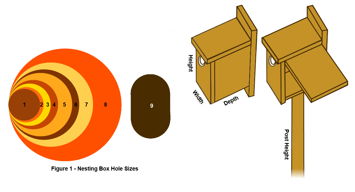 nesting-box-hole-sizes-1.2.png