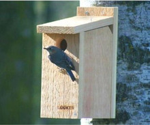 Songbird Essentials Bluebird House View Thru