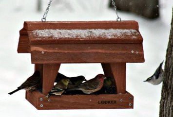 Songbird Essentials Fly Thru Barn Feeder