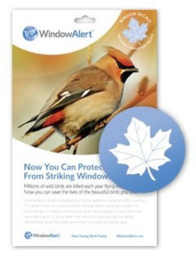 Maple Leaf Window Decal-Save Wild Birds!