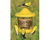 Songbird Essentials Clingers Only Bird Feeder (yellow)
