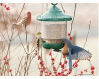 Songbird Essentials Clingers Only Bird Feeder (Green)