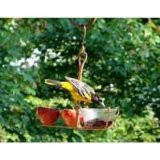 Songbird Essentials Fruit and Jelly Feeder