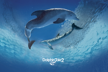 Blue with White Text Dolphin Tale 2 Poster