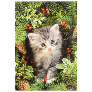 Christmas Kitten 10 Card Box C73028