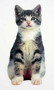 """Kitten Get Well Card """"Frisky""""  - CDC09-0021E"""
