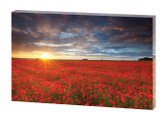 EcoArt exclusive 'Poppies at sunset' print. Panel size 60 x 80 x 3cm