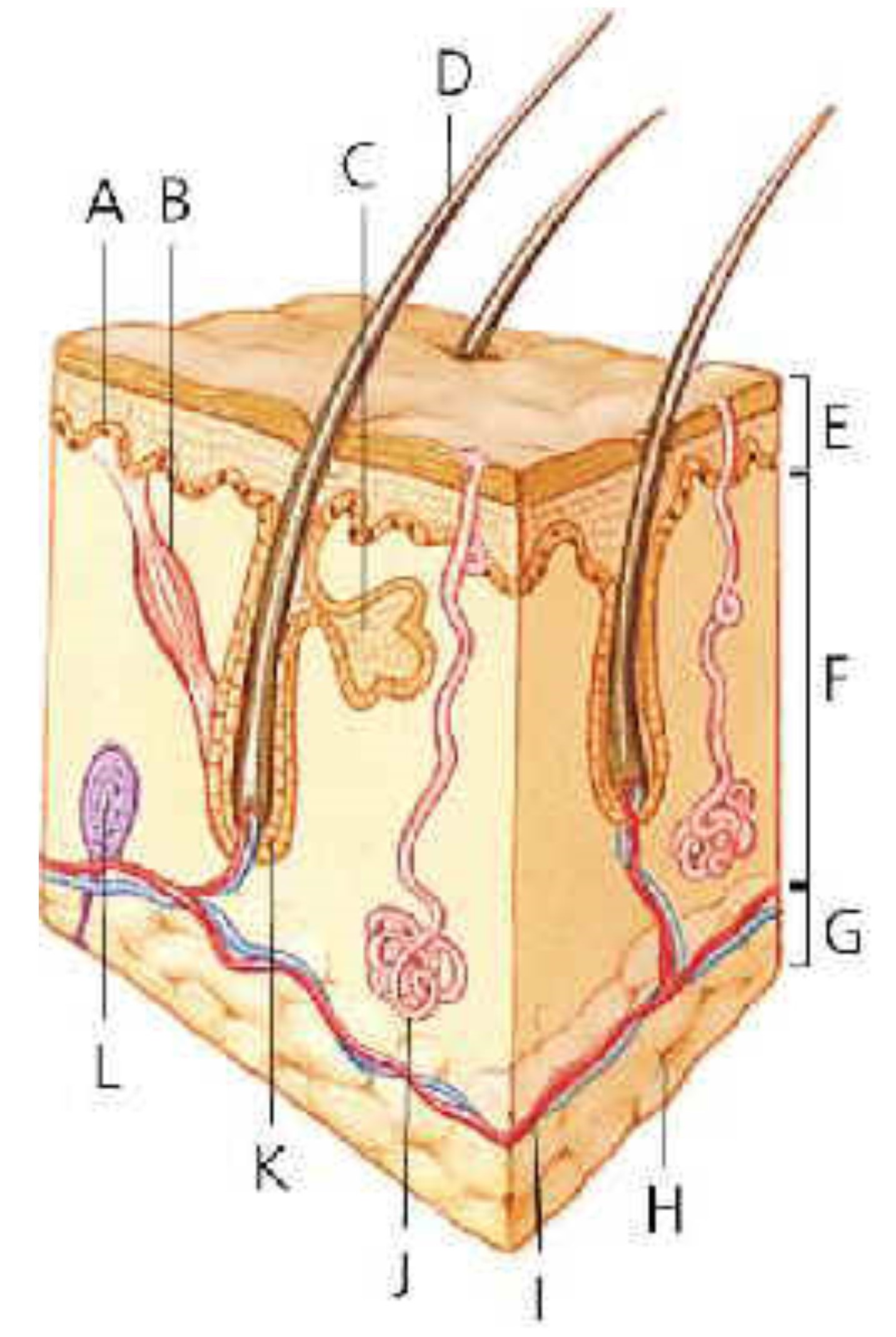 skin-2-.jpg
