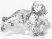 English Setter Pencil Sketch by Craig Cassell, a quadraplegic artist who draws with his mouth.