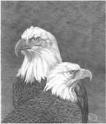 Eagle Pencil Sketch by Craig Cassell, a quadraplegic artist who draws with his mouth.
