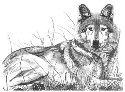 Majestic Wolf Pencil Sketch by Craig Cassell, a quadraplegic artist who draws with his mouth.