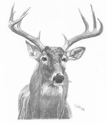 Great Whitetail Deer Pencil Sketch by Craig Cassell, a quadraplegic artist who draws with his mouth.