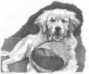 Puppy Resting Pencil Sketch by Craig Cassell, a quadraplegic artist who draws with his mouth.