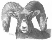 Big Horn Ram Pencil Sketch by Craig Cassell, a quadraplegic artist who draws with his mouth.