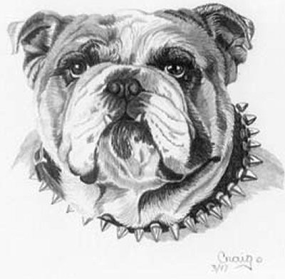 Bull Dog Pencil Sketch by Craig Cassell, a quadraplegic artist who draws with his mouth.