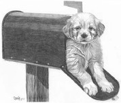 Puppy Mail Pencil Sketch by Craig Cassell, a quadraplegic artist who draws with his mouth.