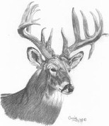 12 Point Buck Pencil Sketch by Craig Cassell, a quadraplegic artist who draws with his mouth.