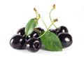 Unicorn Vapors -Black Cherry