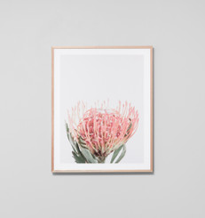 PROTEA BLOOM BLUSH