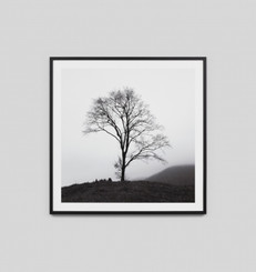 MISTY TREE 2