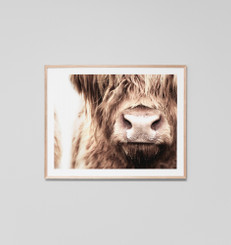 Highland Cow Nose