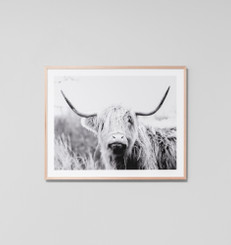 Highland Bovine Grey