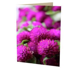 """""""Straw Flowers"""" Card"""