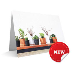 """Bench of Plants"" Card"