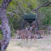 Large Capacity 1,000 lb. Texas Hunter Protein Feeder