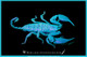 A Rainforest Scorpion fluorescing under ultra-violet (UV) light.