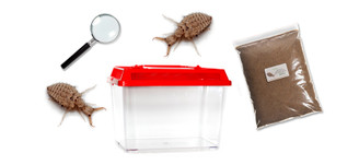 Antlion Kit