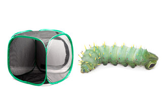 Hercules Moth Caterpillar Kit - Save 15%