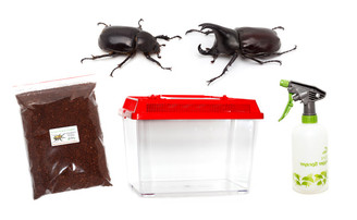 Rhinoceros Beetle Kit - save 15%