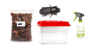 Giant Bess Beetle Kit - save 10%