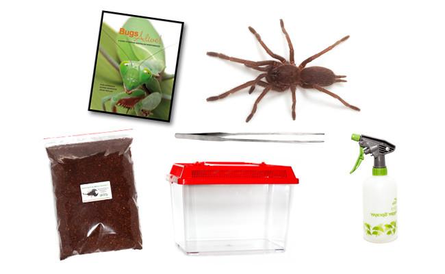This kit includes one juvenile (unsexed) tarantula