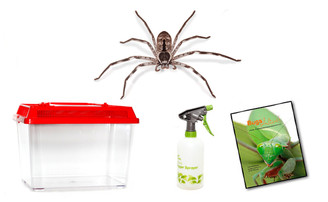 Banded Huntsman Spider Kit - save 10%