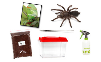 Featherleg Tarantula Complete Kit (Selenotypus sp. - Carbine)