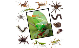 Bugs Alive: A detailed guide for the care of Australian terrestrial invertebrates.