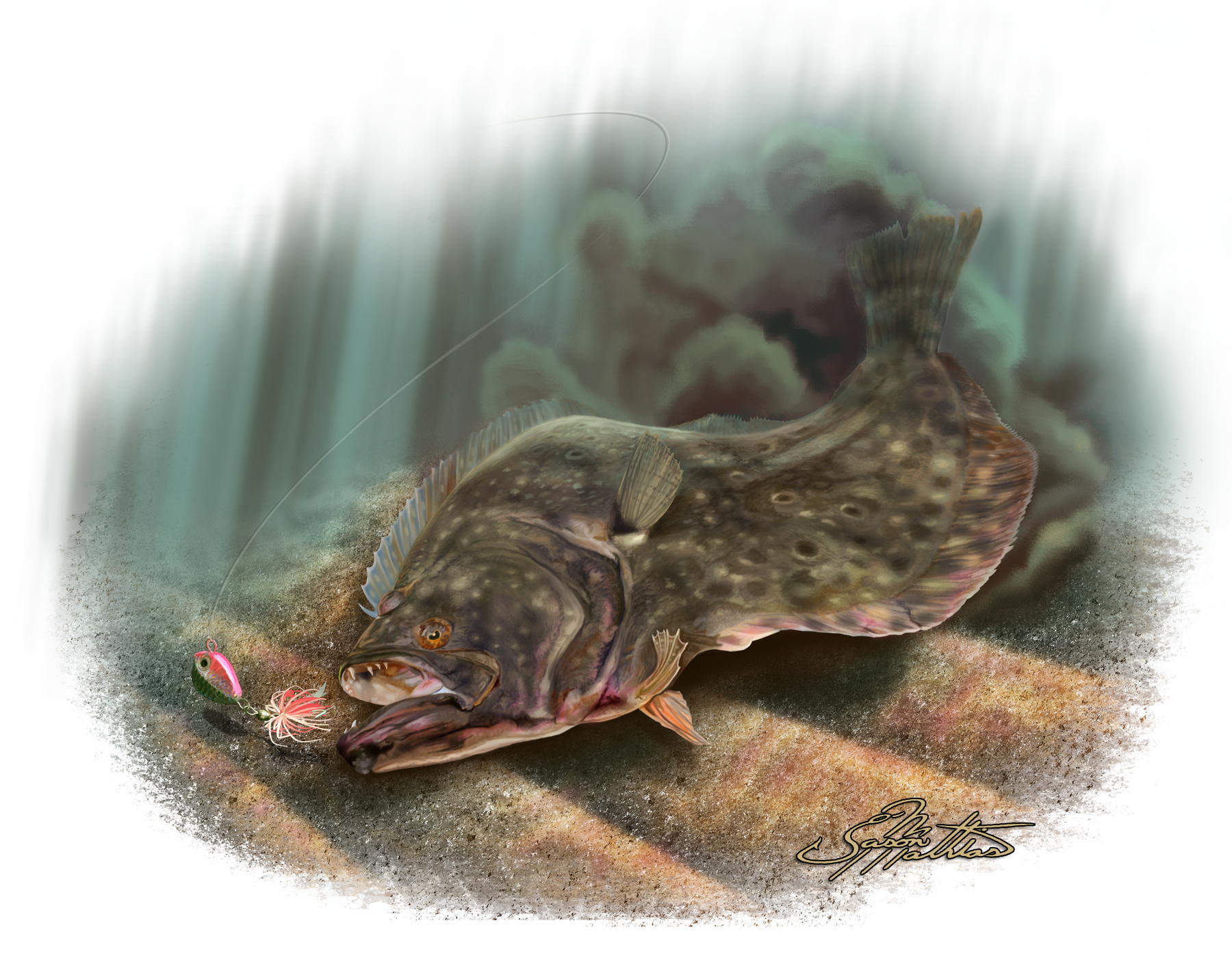 Image gallery summer flounder for Picture of a flounder fish