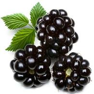 Blackberry Zinger