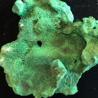 Fibrous Malachite  126 grams