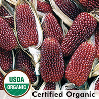 Two Inch Strawberry Corn Organic Seeds - Seed Savers Exchange | Amish Country Store in Branson, Missouri