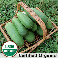 Double Yield Cucumber Seeds Organic - Seed Savers Exchange | Amish Country Store in Branson, Missouri