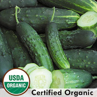 Early Fortune Cucumber Organic Seeds - Seed Savers Exchange | Amish Country Store in Branson, Missouri