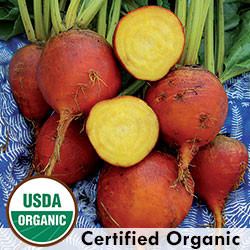 Burpees Golden Beet Organic Seeds - Seed Savers Exchange | Amish Country Store in Branson, Missouri