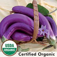 Ping Tung Long Eggplant Organic