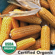 Tom Thumb Popcorn Organic